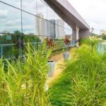 Serviços de paisagismo e jardinagem