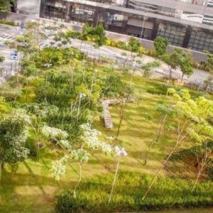 Execução de jardins