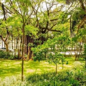 Limpeza e manutenção de áreas verdes